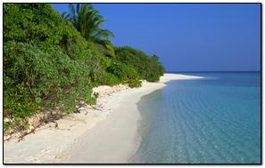 Tropics Beach Palm Trees Summer