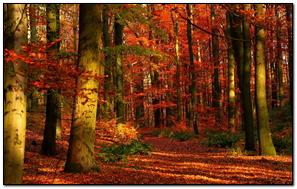 Autumn Wood Leaves
