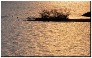 River Rippling Flowing Grass