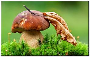 Mushroom Grass Leaf