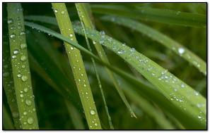Nice Morning Water Drop