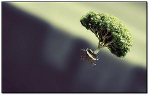 Flying Bonsai