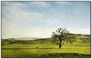 Tree Field Hills Lonely Greens Sky Slopes Summer