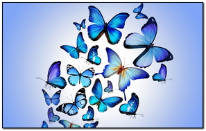 Butterfly Colorful Blue Drawing Art Beautiful