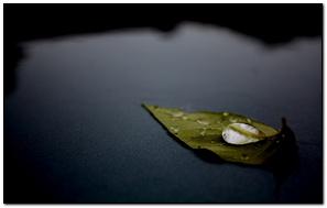 Su üzerinde yaprak