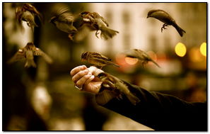 Sparrows Fly