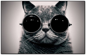 Cat Wearing Sun Glass