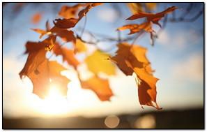 Autumn Leaves Sun