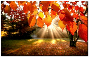Hermoso árbol de otoño