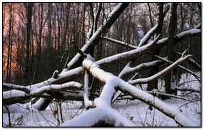 Madera de nieve