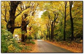 Autumn Road Alongside village