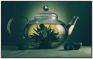 Plants Inside The Pot