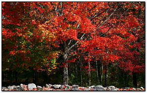 Autumn Season Fall Leaves