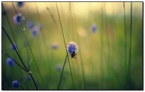 La abeja chupa la flor morada