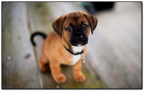 Chó chó dễ thương