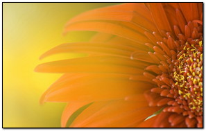 Fresh Half Sun Flower
