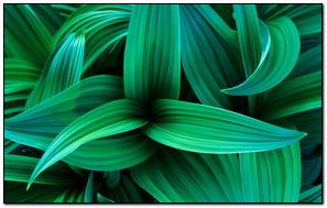 Leaf (Windows 7