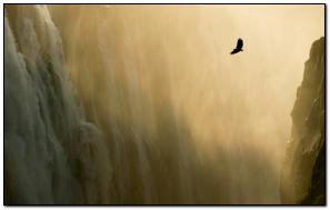 Eagle & Waterfall Mac Os X Lion