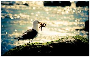 Seagull & Starfish