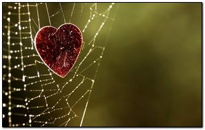 Spider Heartq