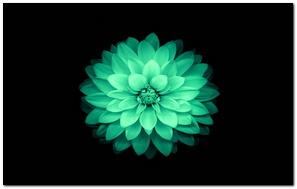 IPhone 6 Lotus Wall 7