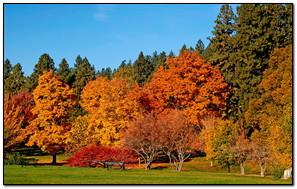 Park Autumn Trees
