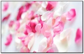 Hoa lan xanh