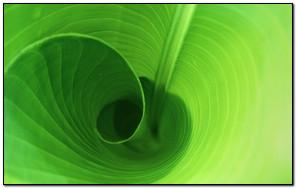 Spinning Green Leaf