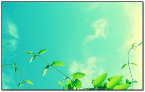 Leaf And Blue Sky