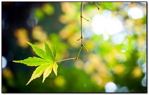 Green Original Leaf