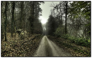 Scary Silent Road