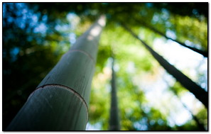 A Bamboo