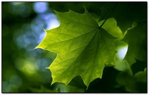 Green Nature Leaf