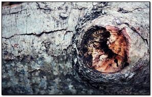 Mắt cá sấu