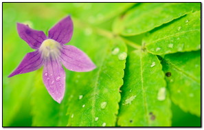 Green Leaf And Purple Flower