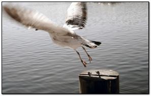 Flying Moving Bird