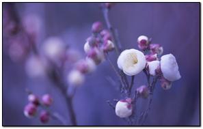 Brotes del árbol de primavera