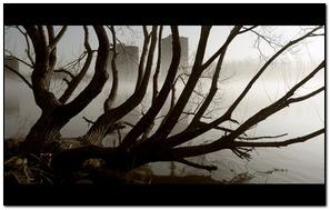 Sorrow Tree
