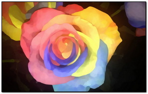 Mixed Color Rose