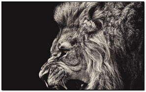 Hóng hớt Lion