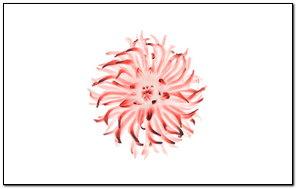 Apple Red Flower