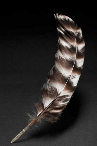 Kuş tüyü