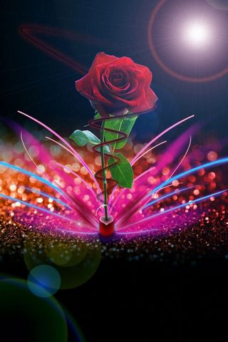 Abstract Rose Hd