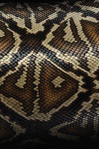 Змія шкіра