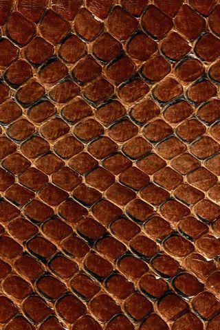 Dark-Snake-Skin