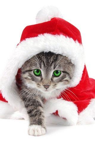 圣诞老人动物-9