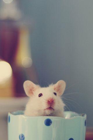 Милі миші