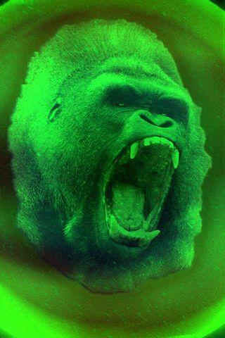 Con khỉ đột