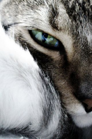 Eye Cat 2