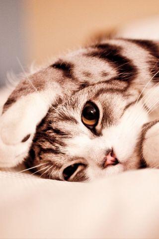 Kucing Malas yang Lucu